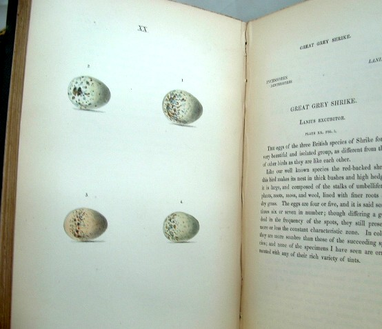 Image for Coloured Illustrations of the Eggs of British Birds  Volumes 1 and 2