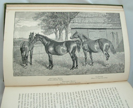 Image for Light Horses Breeds and Management
