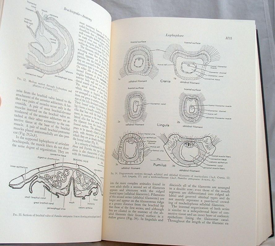 Treatise On Invertebrate Paleontology Part H Brachiopoda